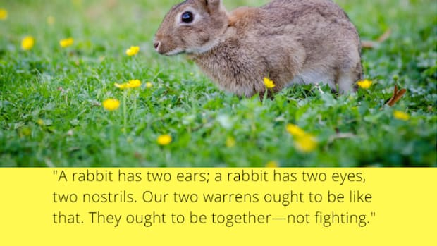 richard_adams_watership_down_quotes_a_rabbit_has_two_ears_a_rabbit_has_two_eyes_two_nostrils_they_ought_to_be_together_not_fighting