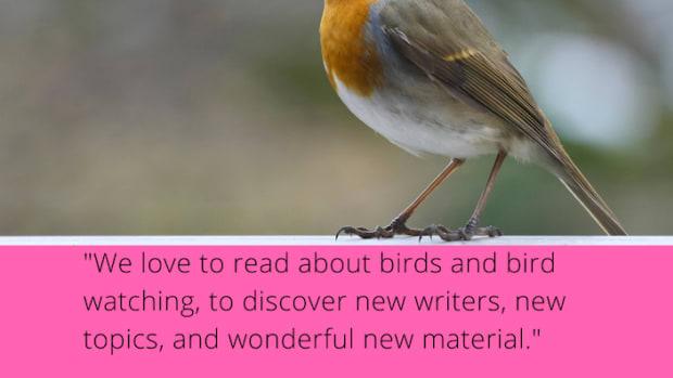 bird_watchers_digest_market_spotlight