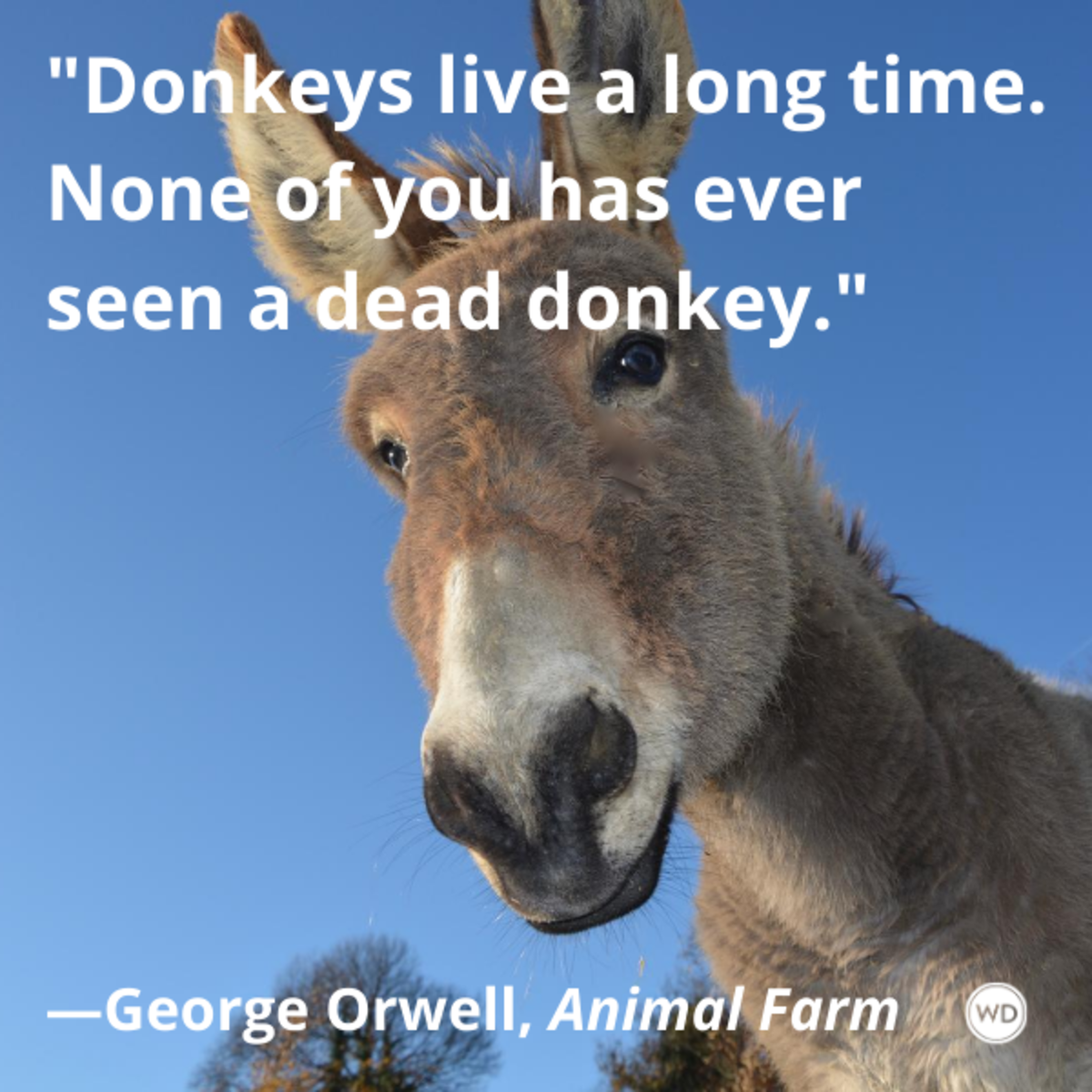 animal_farm_by_george_orwell_quotes_donkeys_live_a_long_time