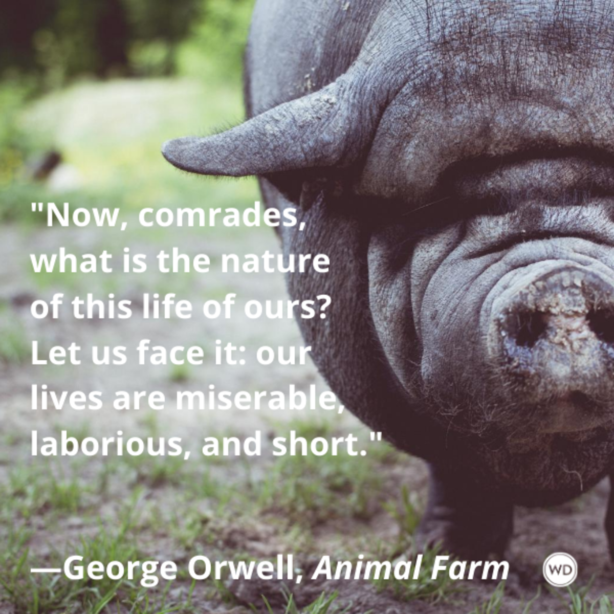 animal_farm_quotes_by_george_orwell_now_comrades_what_is_the_nature_of_this_life_of_ours