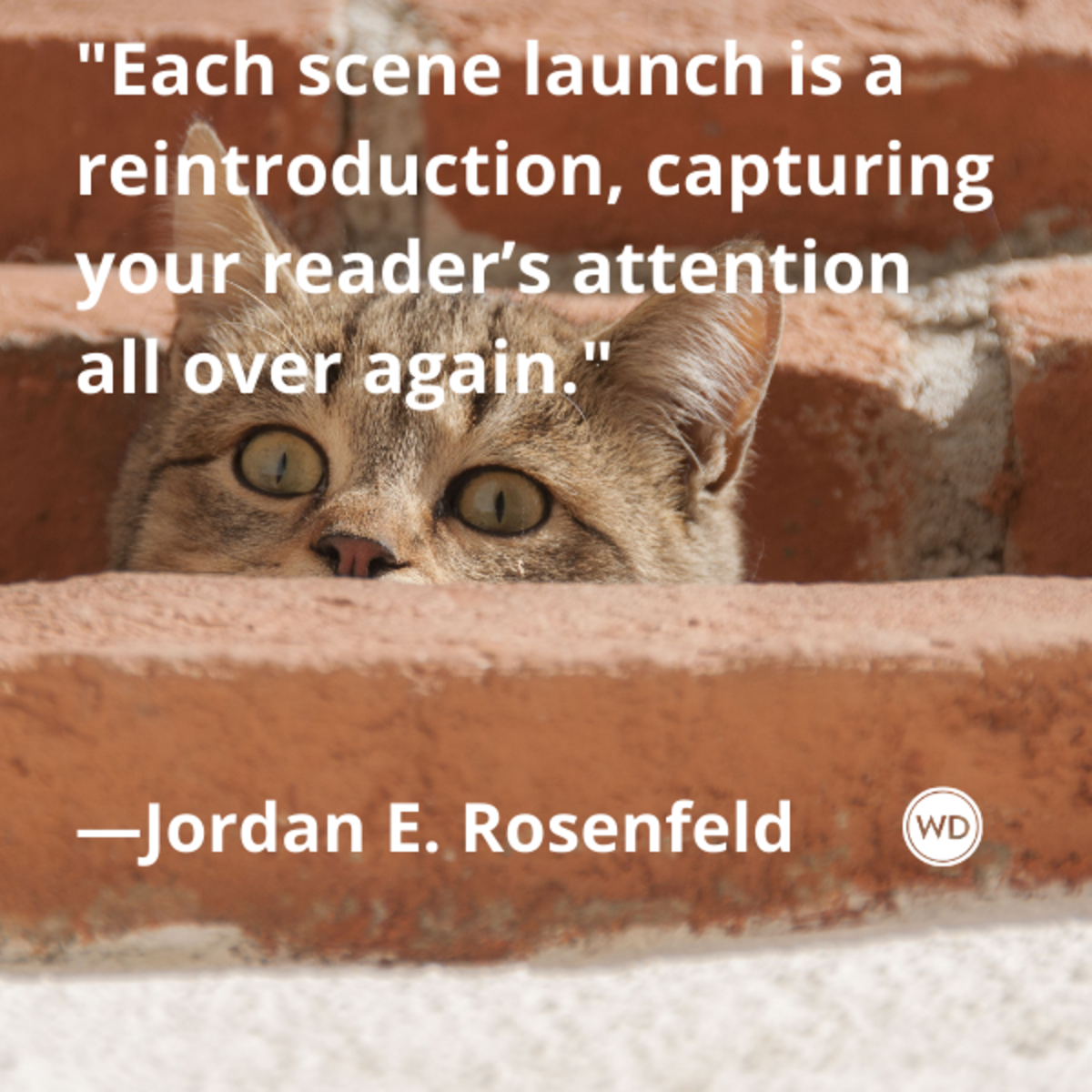 jordan_e_rosenfeld_quotes_each_scene_launch_is_a_reintroduction_capturing_your_readers_attention_all_over_again_nanotips_nanowrimo