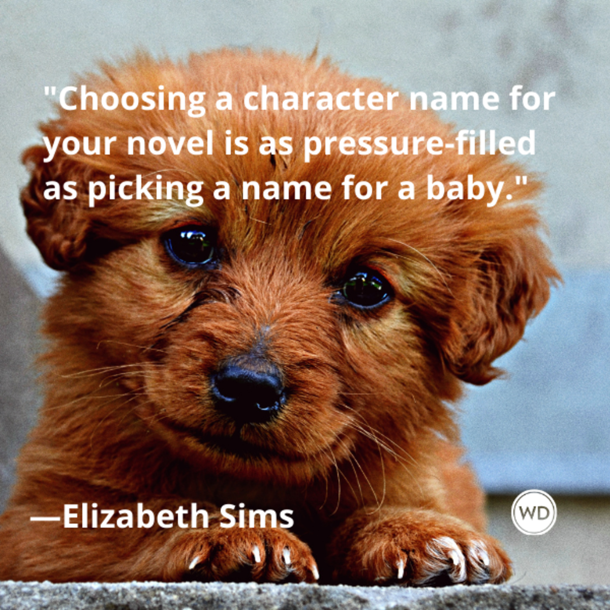elizabeth_sims_quotes_choosing_a_character_name_for_your_novel_is_as_pressure_filled_as_picking_a_name_for_a_baby_writing_advice_with_dogs
