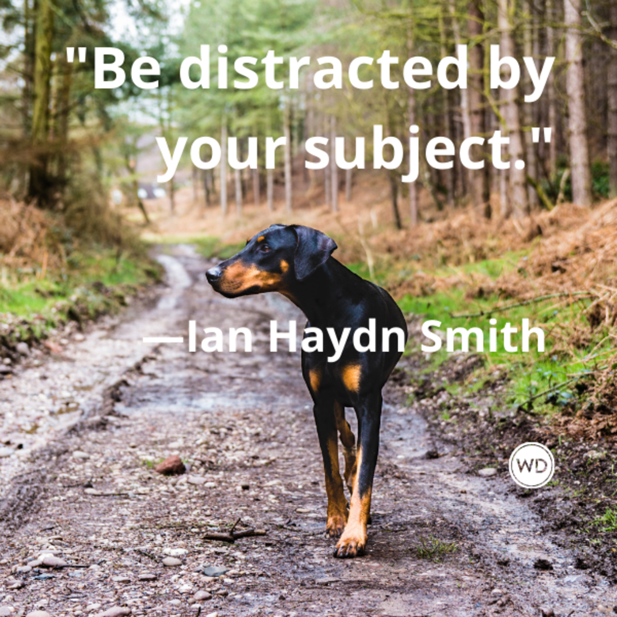 ian_haydn_smith_quotes_be_distracted_by_your_subject_writing_advice_with_dogs