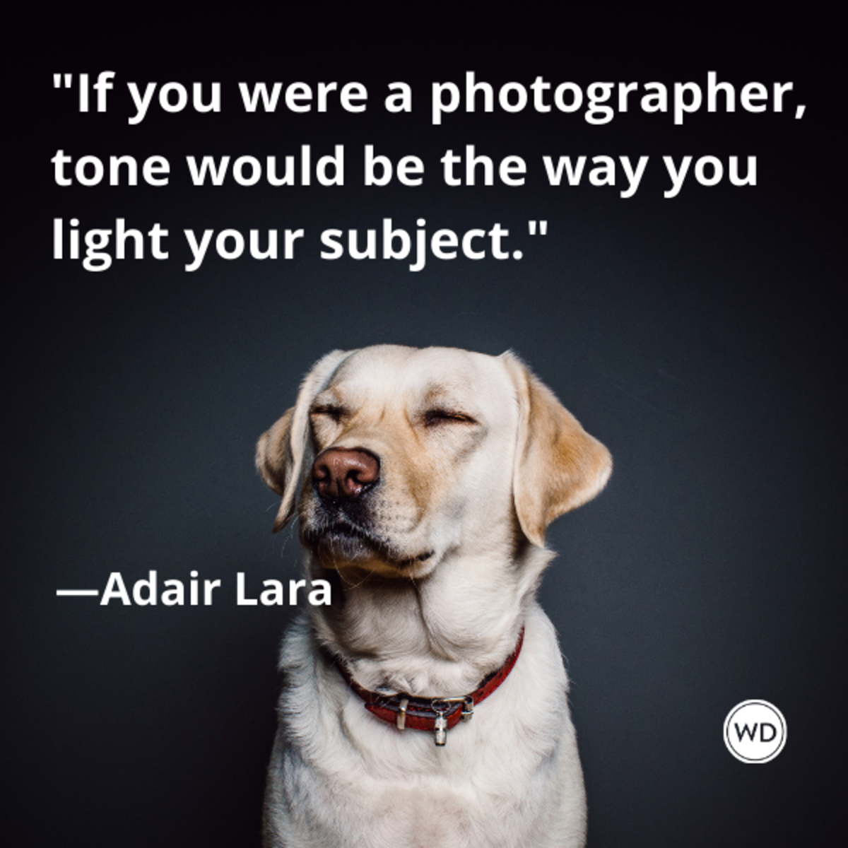 adair_lara_quotes_if_you_were_a_photographer_tone_would_be_the_way_you_light_your_subject_writing_advice_with_dogs