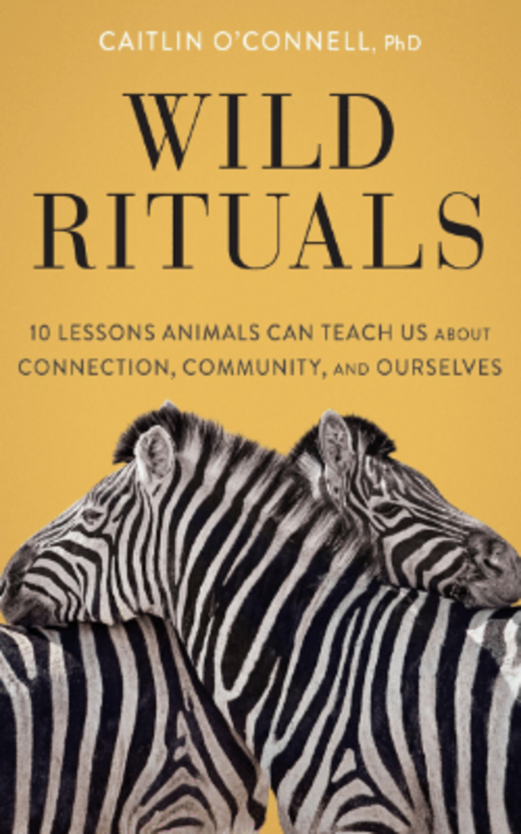 wild_rituals_10_lessons_animals_can_teach_us_about_connection_community_and_ourselves_caitlin_oconnell_phd_book_cover