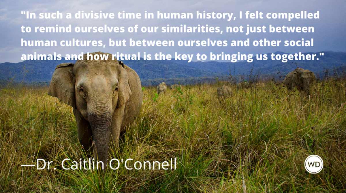 dr_caitlin_oconnell_finding_connection_and_community_in_animal_rituals_author_spotlights