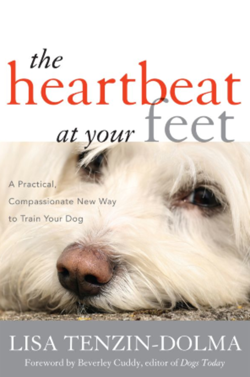 the-heartbeat-at-your-feet-book